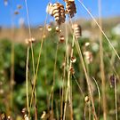 Rattlesnake Grass  by ToddDuvall