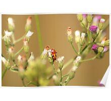 orange fire bug Poster
