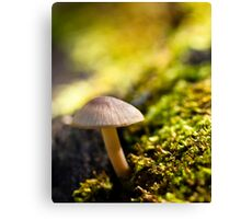 Nature's Hut Canvas Print