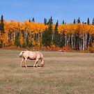 Horse in autumn by zumi
