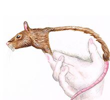 a rat in the hand... by mindgoop