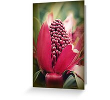 Nature's Promise.... Greeting Card