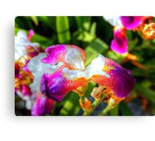 unfolding flower-another version Canvas Print