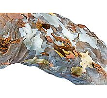 Patchwork Bark Photographic Print