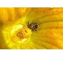 Pollen Heaven Photographic Print