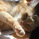 Little Miss Sunbathes by Alyshia Hansen