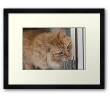 Chi Chie the diva Framed Print