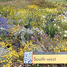 Wildflowers of South Western Australia by Susan Moss