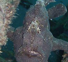 Frog Fish, Mabul, Borneo by Juliette Myers