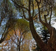 Seats under the big trees by finnarct