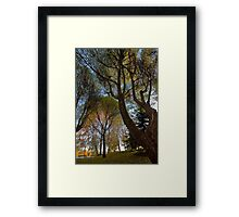 Seats under the big trees Framed Print