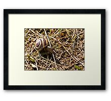 On the Move Framed Print