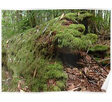 Paluma Rainforest Poster
