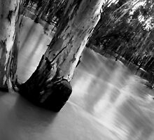 Ovens River, Peechelba by Natalie Ord