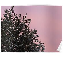 Blossom on the Pink Sky Poster
