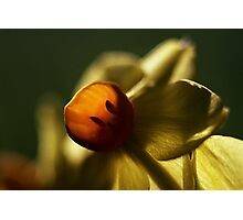 Jonquil, Early Morning Photographic Print