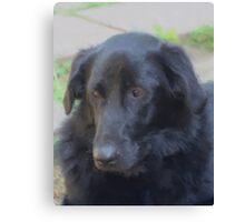 Soulful Black Dog Canvas Print