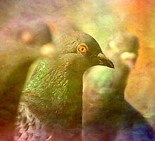 Pigeons...an impression. by inkedsandra