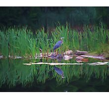 Blue Heron Reflections Photographic Print