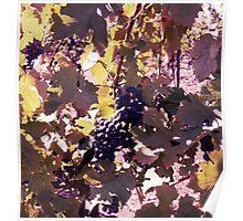 Pinot Noir Poster