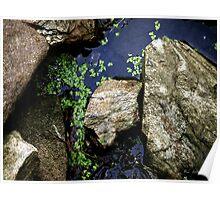 Duckweed on the Rocks Poster