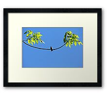 Perched Hummer Framed Print