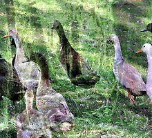 Dreamy Ducks by TPOO