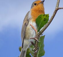 Robin in Eden by Bel Menpes