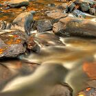Golden Autumn Stream by Gregory Ballos | gregoryballosphoto.com