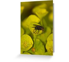 Pollen Speckled Fly Greeting Card