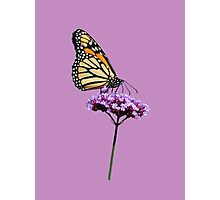 Monarch on mauve t-shirt/leggings/merchandise Photographic Print