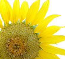 Clytie by SunflowerAnnie