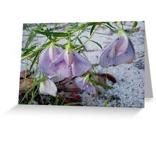 Butterfly Pea - a species of Clitoria Greeting Card