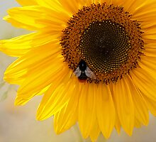 The Bee And The Sunflower  by Bel Menpes