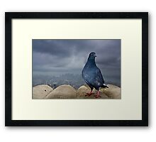 Empire State Pigeon Framed Print
