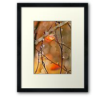 Autumn colours abstract Framed Print