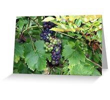 The Grape Vine Greeting Card