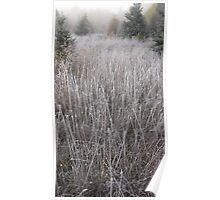 Frosty Meadow Poster