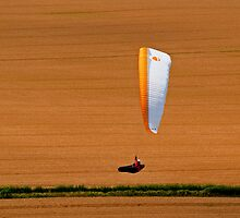 Paraglider Over Golden Wheat Field by Bel Menpes