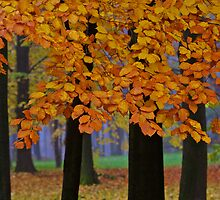 Views: 9600*** ♥ ♥ ♥ ♥ series . Forever Autumn   . Eye-catcher - For Sure ! Fav: 76.  Thx friends ! muchas gracias !!! This image Has Been S O L D . Buy what you like!  by © Andrzej Goszcz,M.D. Ph.D