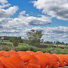 Pumpkin Time by mikepaulhamus
