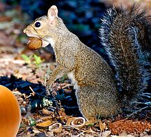 Wow I think that Orange Nut is too big for my mouth by imagetj