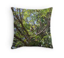 Wattle Bird Throw Pillow