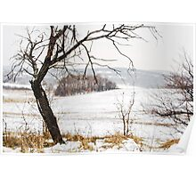 Winter landscape with an ugly tree. Poster