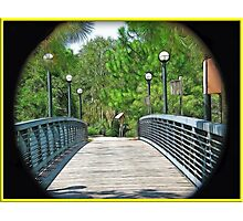 Walkway to The Forrest Photographic Print