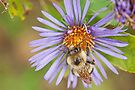 Aster Risk! by Mike Oxley
