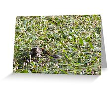 Pair of Little Grebe with nest full of eggs. Greeting Card