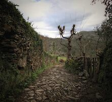 Paths by damien-c