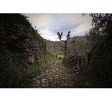 Paths Photographic Print