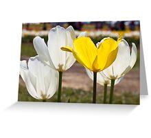 White & Yellow - Tulips Greeting Card